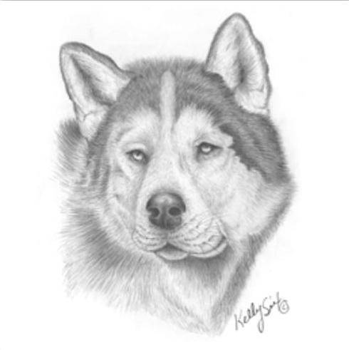 Собака хаски раскраска 197
